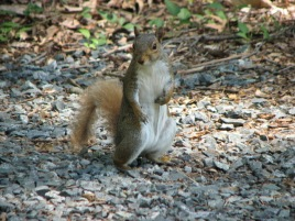 Squirrel 4